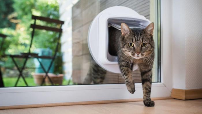 Est-il possible d'installer une chatière dans un vitrage ?